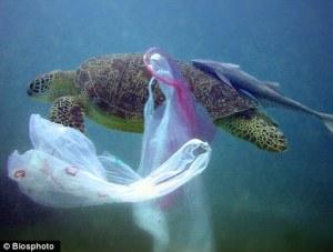 Las bolsas plásticas, un problema de todos los días